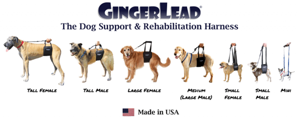 Gingerlead Dog Support Harness - VetRxDirect BlogVetRxDirect Blog