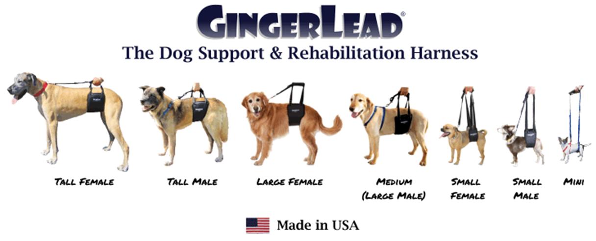 Gingerlead Dog Support Harness - VetRxDirect BlogVetRxDirect Blog