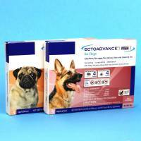 EctoAdvance Plus for Dogs Kills Fleas
