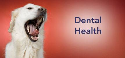 Dog Health Dental