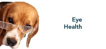 Dog Health Eye