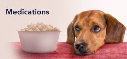 Dog Medications