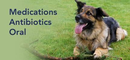 teen-pics-puppies-too-young-for-oral-antibiotics-gangbang