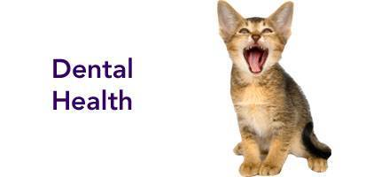 Cat Health Dental