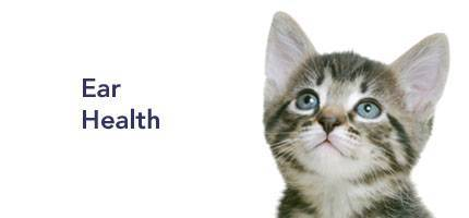 Cat Health Ear