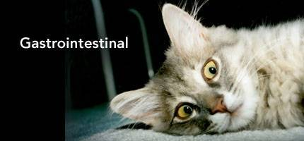 Cat Health Gastrointestinal