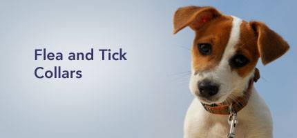 Dog Flea and Tick Collars