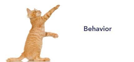 Cat Health Behavior