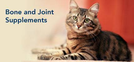 Cat Bone and Joint Supplements