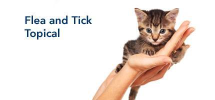 Cat Flea and Tick Topical
