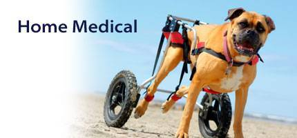 Dog Home Medical