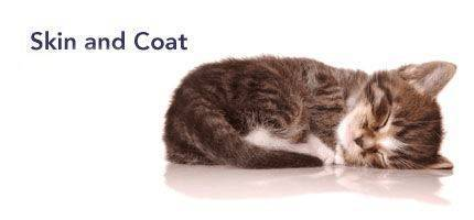 Cat Skin and Coat